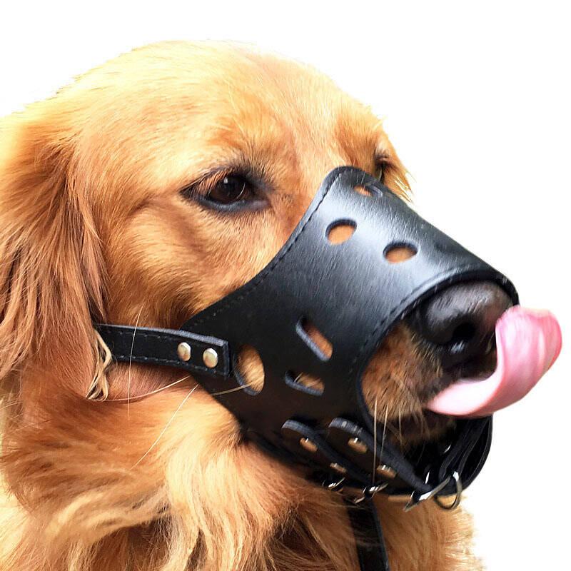 养狗必备!十大狗狗安全嘴套排行榜