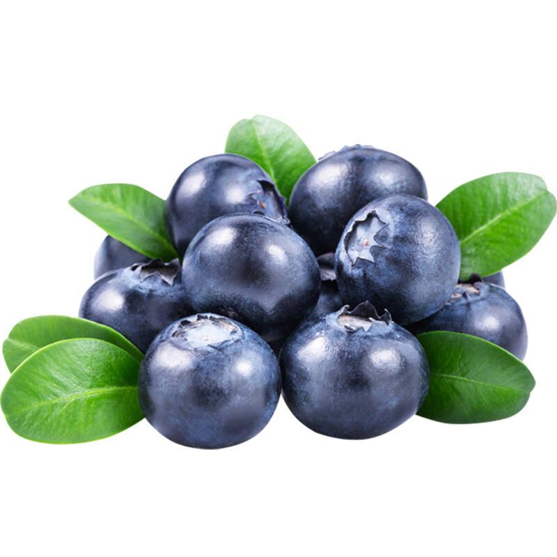个头最大口感最好的蓝莓推荐2021