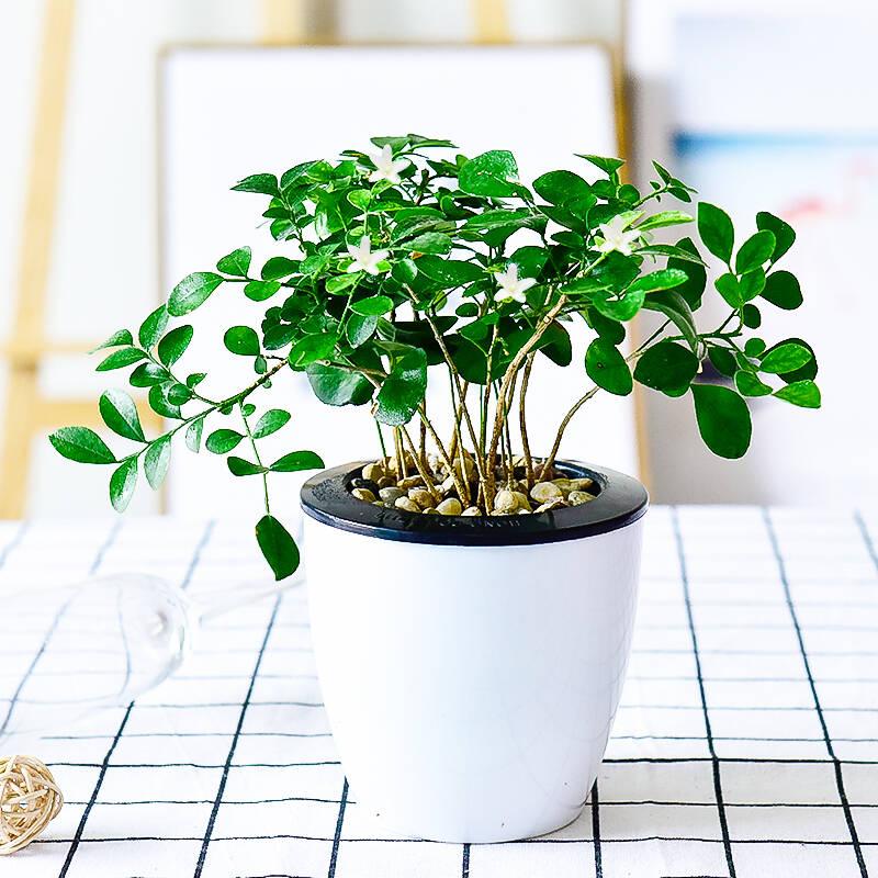 适合书房的桌面盆栽植物排行榜