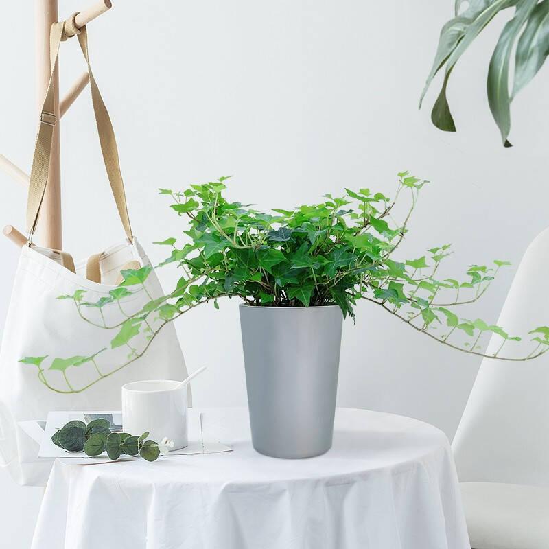适合教室养的小盆栽推荐前十