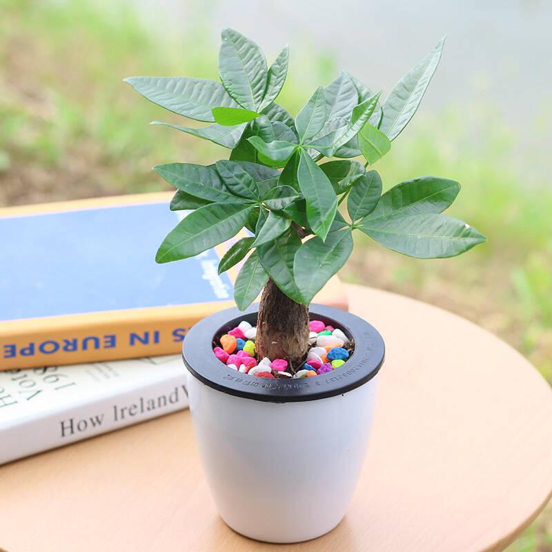 好养活的小型盆栽排行榜十强
