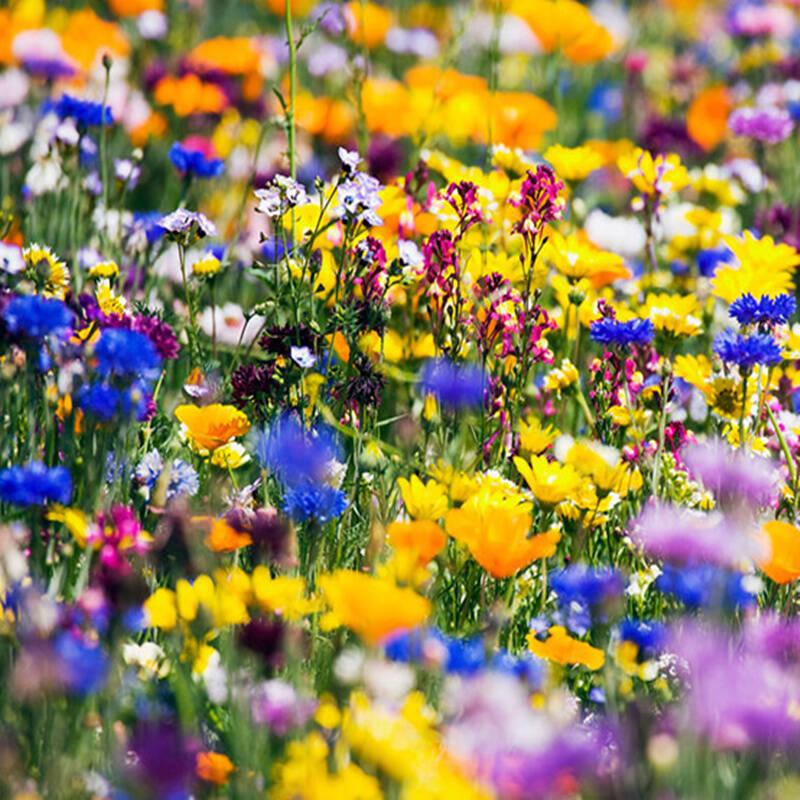 2021十款适合盆栽的花种子